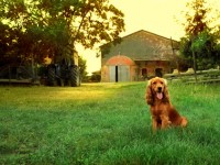Pet Friendly Campgrounds | Wisconsin