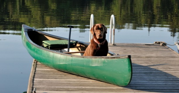 Pet Friendly Campgrounds | Michigan