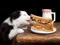 Human Food That's Bad for Dogs
