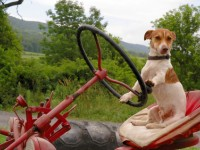 Pet Friendly Campgrounds | Maryland