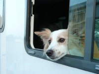 Pet Friendly Campgrounds   Ohio