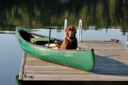 dog-in-canoe-on-dock-michigan