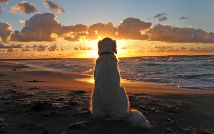 dog-watching-sunset