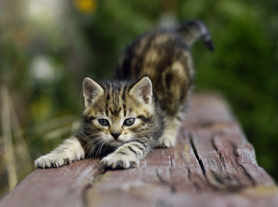 playful-outdoor-kitten