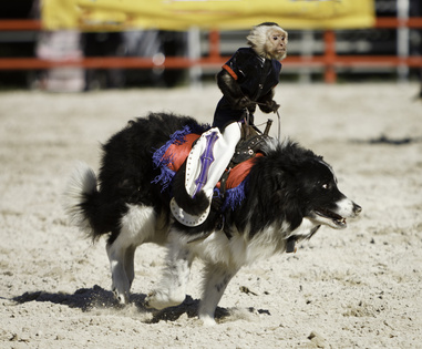 texas-pet-friendly-campgrounds-monkey-riding-rodeo-dog
